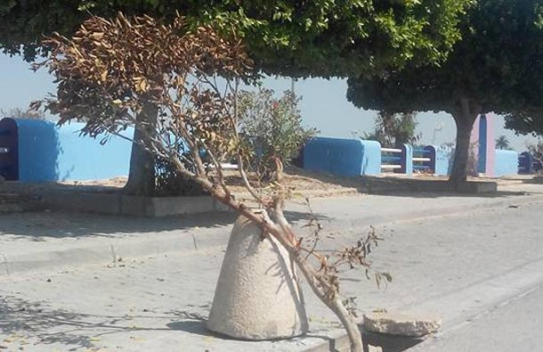 En photos : Au lac 1, un arbre qui sert de cache-misère