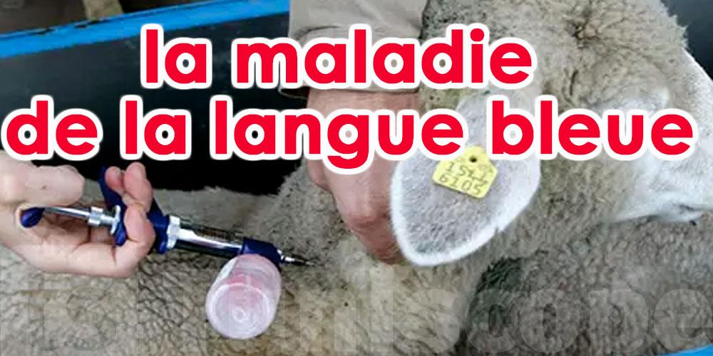 Le médicament de la langue bleue sera disponible l'année prochaine
