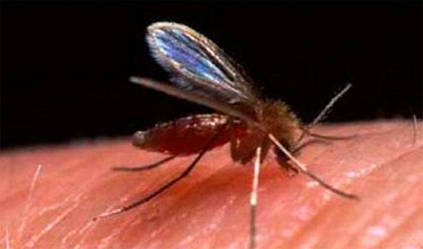 150 cas de leishmaniose cutanée depuis le début de l'année à Tataouine