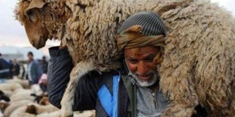 12 Dt le KG pour les moutons