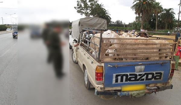 Saisie de 21 moutons espagnols de contrebande à Monastir