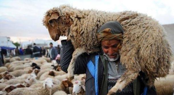 Entre agriculteurs et ''Guachara'', tout savoir sur les prix des moutons ... - Tuniscope