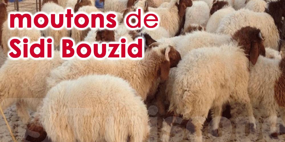 Nouveau projet d'exportation du «Mouton de Sidi Bouzid»