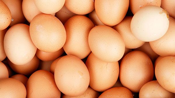 جدل حول تسمّم مادّة البيض و إتلاف كميات كبيرة في أوروبا، وزارة الفلاحة توضّح