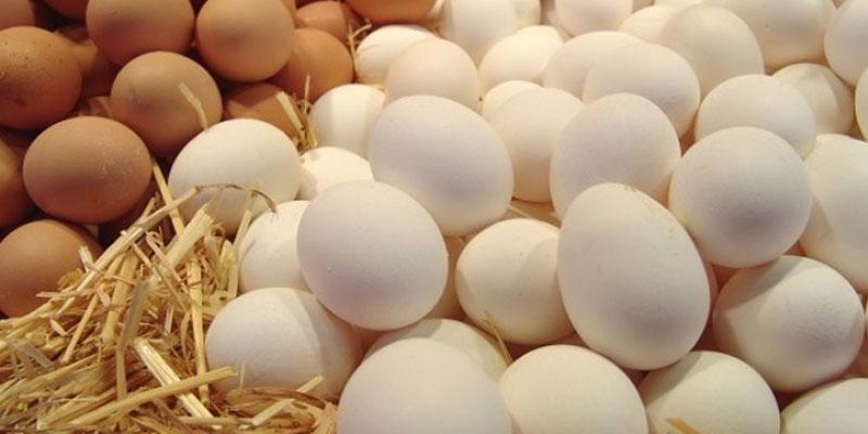 منظمة الدفاع عن المستهلك: سعر البيض بلغ حدا لا يطاق ولا يمكن للمواطن البسيط تحمله