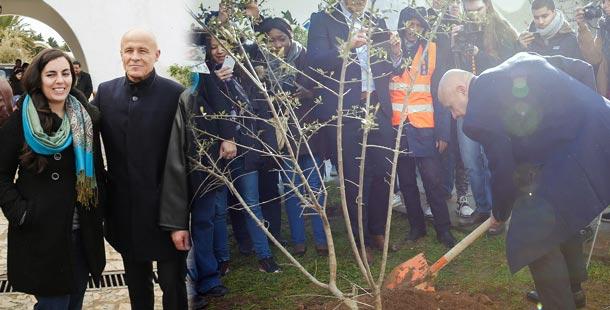 Matinée plantation de 300 arbres à Gammarth : Olivier Poivre d'Arvor met la main à la pâte
