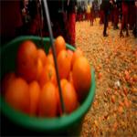 بالصور: معركة بالبرتقال تخلف إصابة 70 شخصا بكدمات