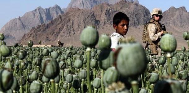 La production d'opium explose en Afghanistan, selon un rapport de l'ONU