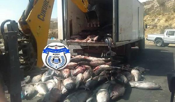 Six camions transportant du poisson suspect de Lybie sèment la confusion