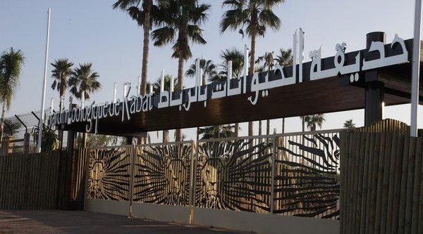 Une fillette de 7 ans tuée par un éléphant au zoo de Rabat