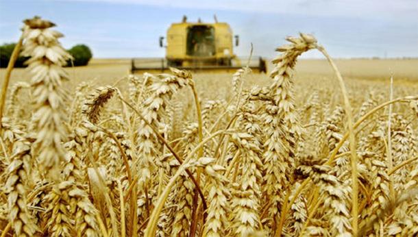 La récolte céréalière 2016/2017 sera meilleure que celle écoulée