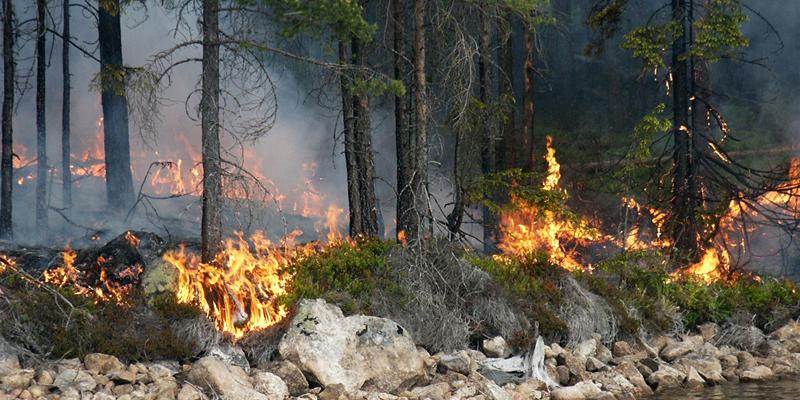 بالصور: غابات السويد تحترق عند 30 درجة مئوية
