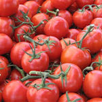 La canicule menace la campagne des tomates qui enregistre des records