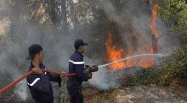 حريق يأتي على 100 نخلة في توزر