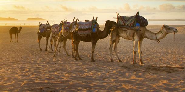 Tozeur : Amélioration des indicateurs touristiques