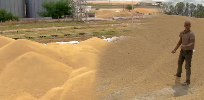 الفيديو: صابة القمح على قارعة الطريق وفلّاح يطلع صيحة فزع