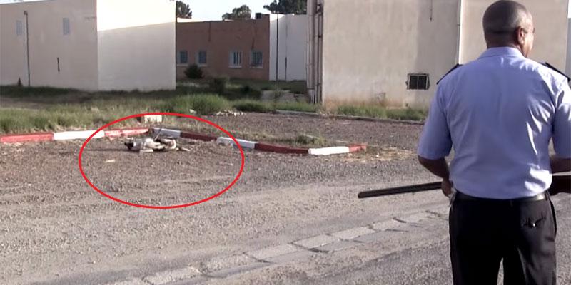 فيديو مؤسف لعملية قنص الكلاب السائبة في تونس