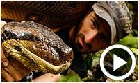 En vidéo : Avalé vivant par un anaconda, pour la télévision