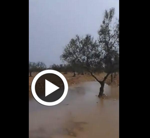 أمطار اليوم: استبشار الفلاحة...