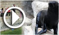 Visite de sensibilisation des coulisses du zoo du Belvédère